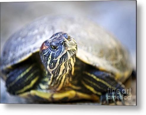 Turtle Metal Print featuring the photograph Turtle by Elena Elisseeva