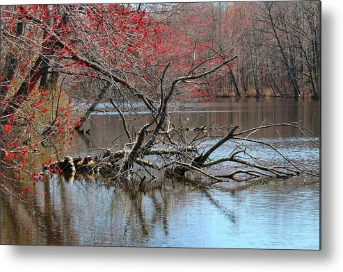 Outdoor Landscape Metal Print featuring the photograph Turtle Tree by Nate Hart