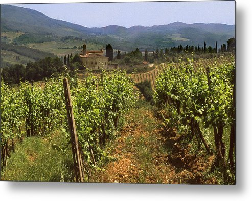 Wine Metal Print featuring the photograph Tuscany Vineyard No.2 by Mel Felix