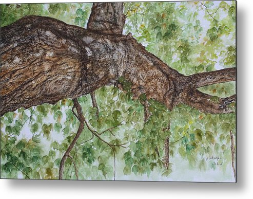 Nature Metal Print featuring the painting Twisted Maple by Patsy Sharpe