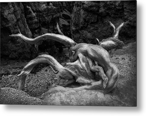 Twisted Remains Of A Tree Metal Print featuring the photograph Twisted by Nichon Thorstrom