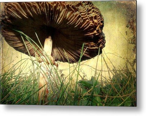 Mushroom Metal Print featuring the photograph Underneath The Mushroom by Sarah Couzens