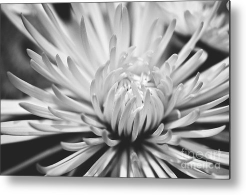 Flower Picture Metal Print featuring the photograph Unfolding by Artist and Photographer Laura Wrede