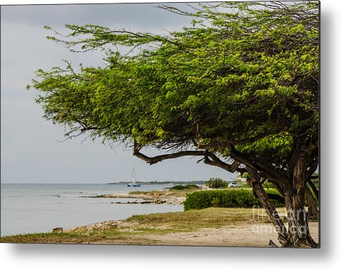 Tree Metal Print featuring the photograph Up The Coast by Judy Wolinsky