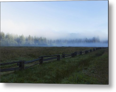Coniferous Metal Print featuring the photograph Usa, California, Elk Prairie In Fog by Ronald Phillips