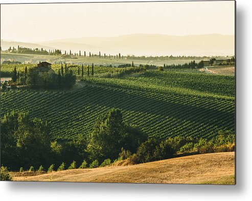 Fine Art Metal Print featuring the photograph Vineyard From Above by Clint Brewer