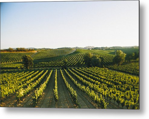 Fine Art Metal Print featuring the photograph Vineyard Patchwork by Clint Brewer