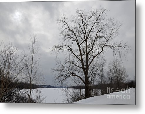 Tree Metal Print featuring the photograph Waiting For The Sun by Andre Paquin