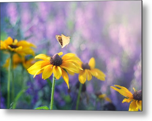 Butterflies On Flowers Metal Print featuring the photograph Wanderlust by Amy Tyler