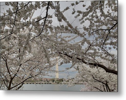 America Metal Print featuring the photograph Washington Monument - Cherry Blossoms - Washington Dc - 011323 by DC Photographer