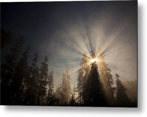 Fog Rays; Redwood Trees; Blue Sky; Magic Metal Print featuring the photograph Watching Over Us by Eggers Photography