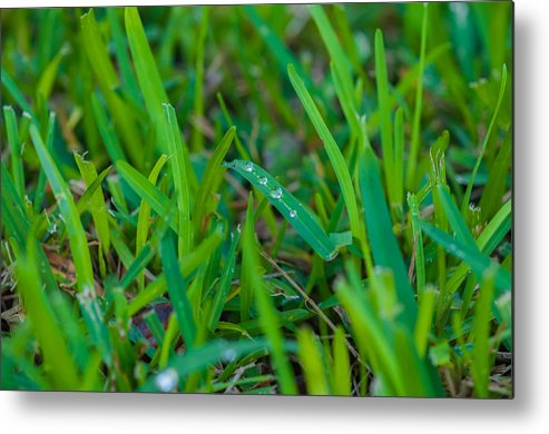 Water Metal Print featuring the photograph Water Drops On The Grass 0010 by Terrence Downing