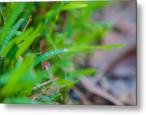 Water Metal Print featuring the photograph Water Drops On The Grass 0013 by Terrence Downing