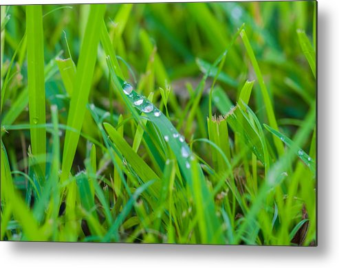 Water Metal Print featuring the photograph Water Drops On The Grass 0017 by Terrence Downing