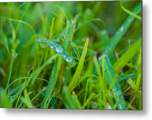 Water Metal Print featuring the photograph Water Drops On The Grass 0018 by Terrence Downing
