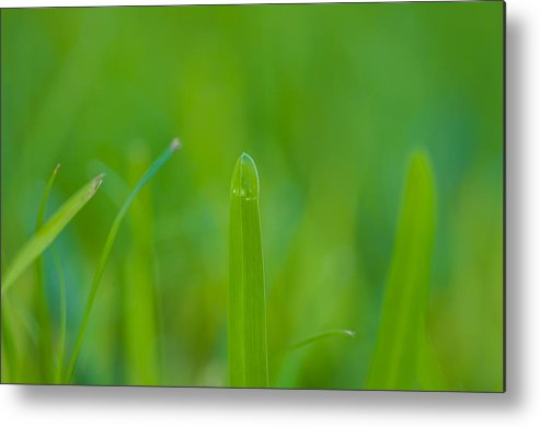 Water Metal Print featuring the photograph Water Drops On The Grass 0023 by Terrence Downing