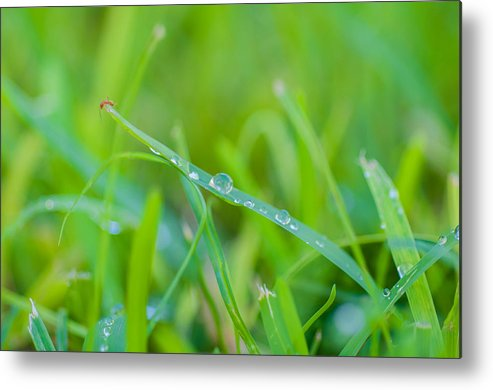 Water Metal Print featuring the photograph Water Drops On The Grass 0026 by Terrence Downing