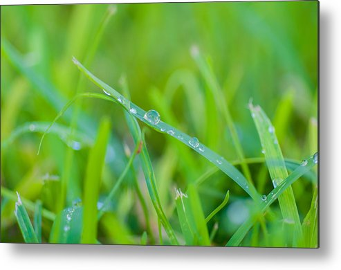 Water Metal Print featuring the photograph Water Drops On The Grass 0029 by Terrence Downing