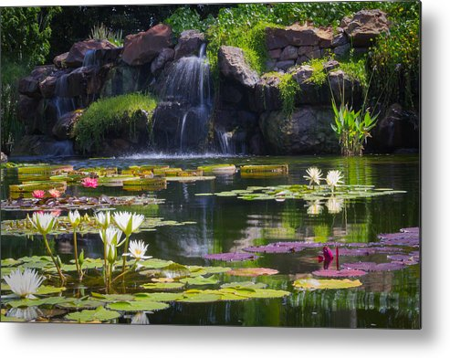 Pond Metal Print featuring the photograph Water Garden by Pete OConnor