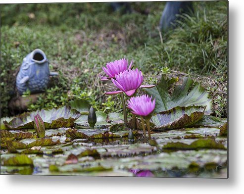 Water Lilly Metal Print featuring the photograph Water Lilly Trio by Charles Warren