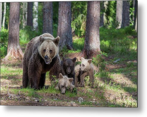 Bear Metal Print featuring the photograph We Are Family by Alessandro Catta
