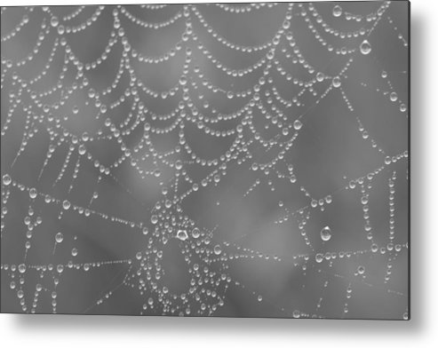 Spider Metal Print featuring the photograph Wet Web by Kimberly Oegerle