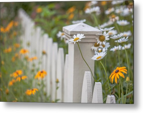 Daisies Metal Print featuring the photograph White And Yellow by June Marie Sobrito