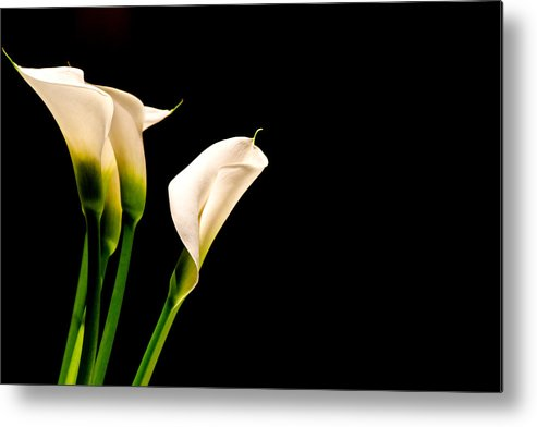 Background Metal Print featuring the photograph White Calla Lillies by Chay Bewley