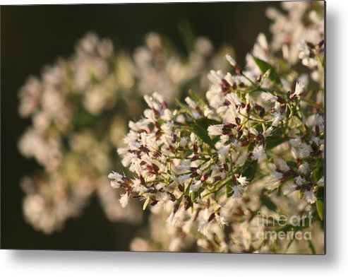 White Metal Print featuring the photograph White Flowers by Nadine Rippelmeyer