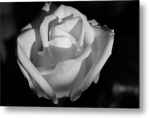 Rose Metal Print featuring the photograph White Rose by Richard Dennis Miller