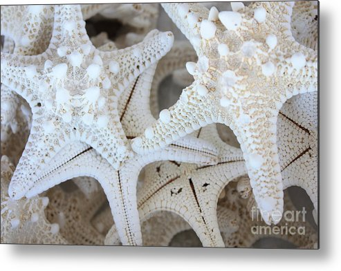 White Metal Print featuring the photograph White Starfish by Carol Groenen