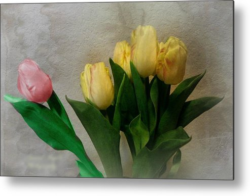 Tulips Metal Print featuring the photograph Why Am I Different. by Carol Grenier