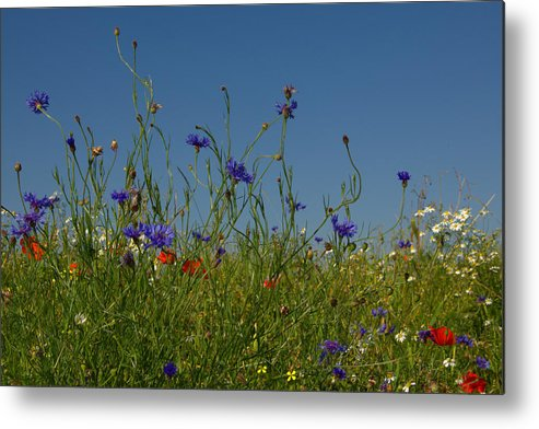 Sky Metal Print featuring the photograph Wild Flowers by TouTouke A Y