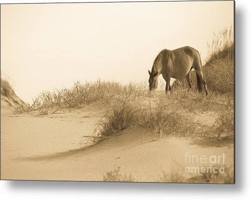 Horse Metal Print featuring the photograph Wild Horse by Diane Diederich