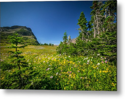 Glacier National Park Metal Print featuring the photograph Wild Mountain Flowers Glacier National Park  by Rich Franco