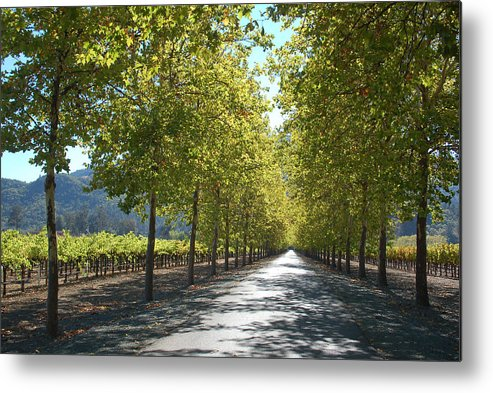 Napa Metal Print featuring the photograph Wine Country Napa by Suzanne Gaff