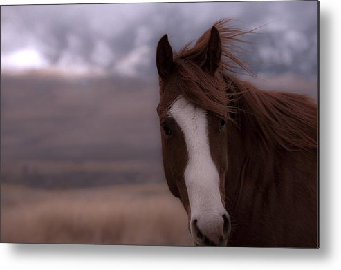 Horse Metal Print featuring the photograph Winter Day On The Ranch by Kevan Garecki