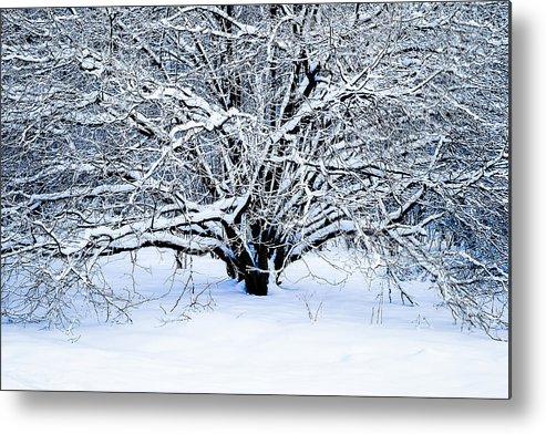 Tree Metal Print featuring the photograph Winter Fresh by Alexander Senin