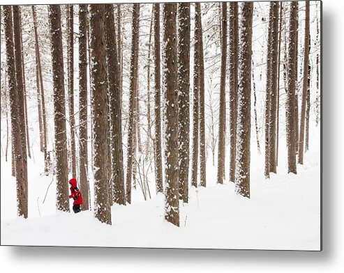 north Woods Snow snowy Woods winter Woods duluth lake Superior Winter fresh Snow greeting Cards amity Woods lester Park child In Landscape childhood Wonder winter Wonderland Metal Print featuring the photograph Winter Frolic by Mary Amerman