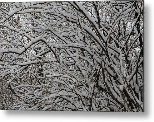 Winters Weight Metal Print featuring the photograph Winters Weight by Rachel Cohen