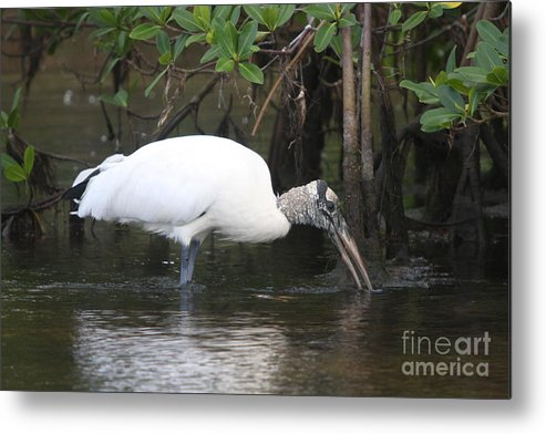 Wood Stork Metal Print featuring the photograph Wood Stork In The Swamp by Christiane Schulze Art And Photography