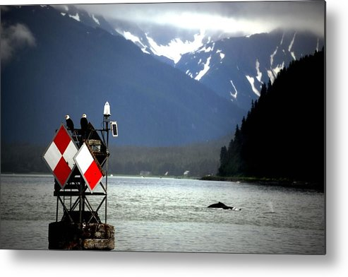 Alaska Metal Print featuring the photograph Monitoring The Whales by Gerald Blaine