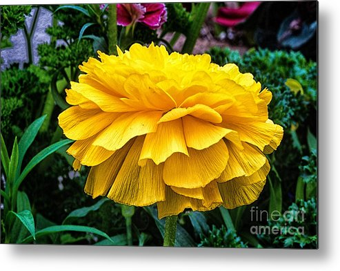 Flowers Metal Print featuring the photograph Yellow By Nature by Gary Ormont