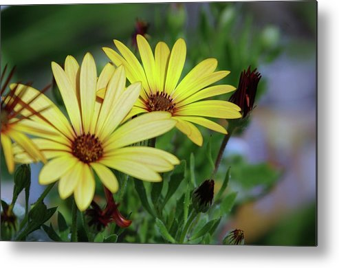Yellow Flowers Metal Print featuring the photograph Yellow Flowers by Jeff Swan