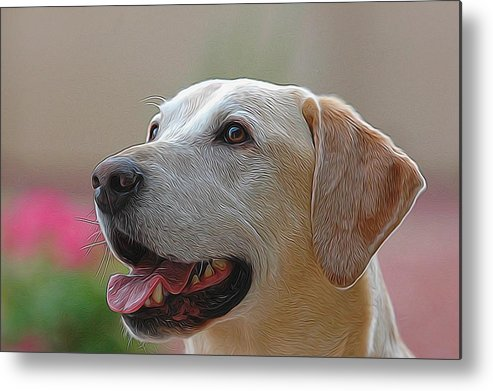 Dog Metal Print featuring the photograph Yellow Lab by Michael Biggs