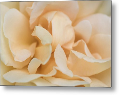 Abstract Metal Print featuring the photograph Yellow Rose - Featured 3 by Alexander Senin
