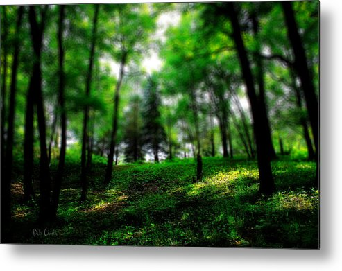 Landscape Metal Print featuring the photograph Simply Spring by Bob Orsillo