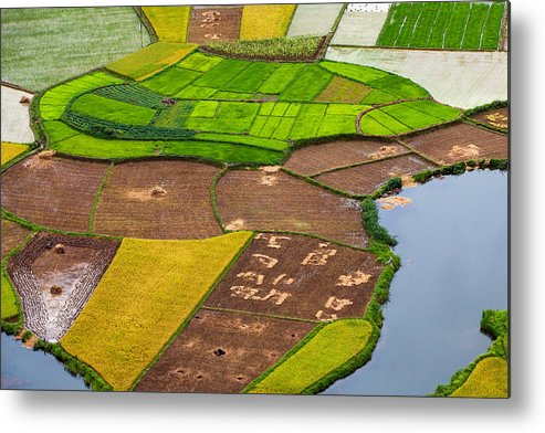 Horizontal Metal Print featuring the photograph Bac Son Rice Field by Hoang Giang Hai