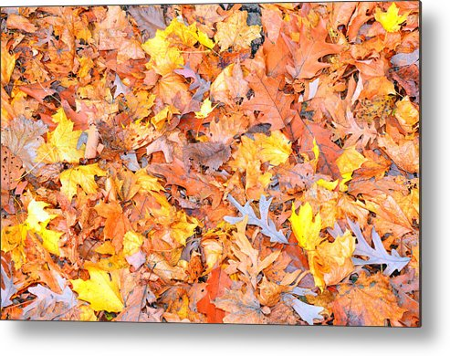 Leaf Metal Print featuring the photograph Leaf by Autumn Wade