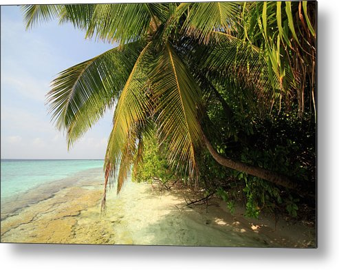 Horizontal Metal Print featuring the photograph Palm Trees Growing On Tropical Beach by Felix Behnke